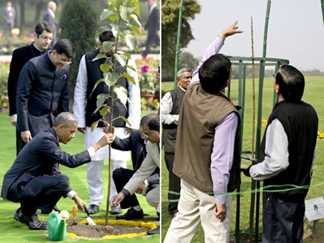 Indian-officials-inspect-the-tree-now-just-a-single-stem-planted-by-US-President-Barack-Obama-at-the-Rajghat-in-New-Delhi-AP-Photo