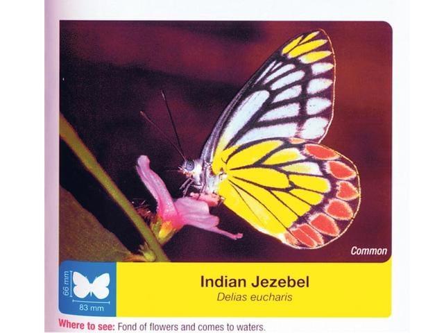 Butterflies,SGNP,Borivli nationa park