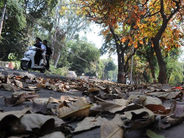Chandigarh,cold weather,Punjab