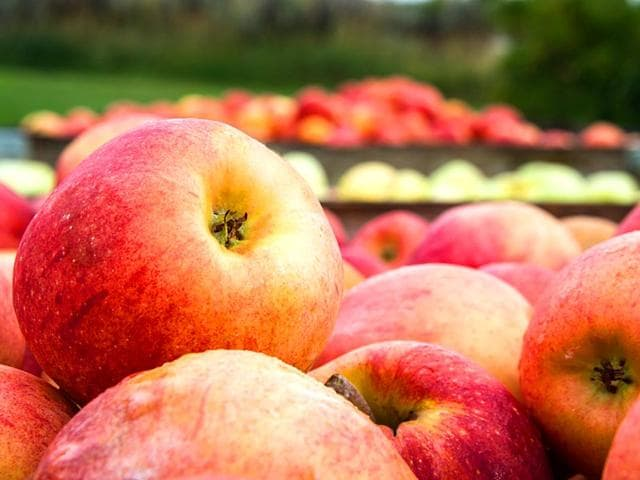 Himachal apple,bad name,southern states