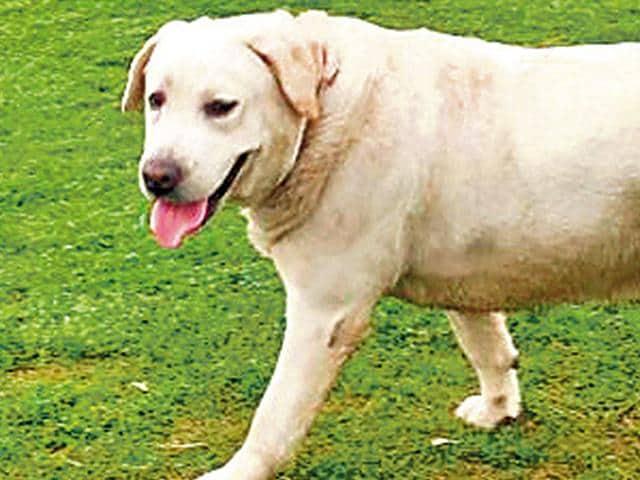Delhi dog missing