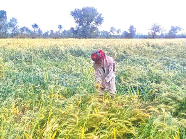 Bhiwani farmer commits suicide over 'crop loss'