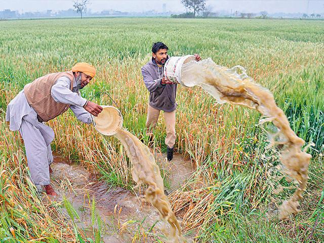 Farmers-clear-rain-water-from-their-flooded-wheat-field-on-the-outskirts-of-Amritsar-AFP-Photo