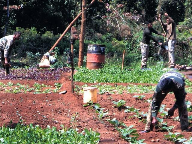 CRPF-personnel-cultivate-vegetables-near-their-camp-in-Thalkobad-HT-photo