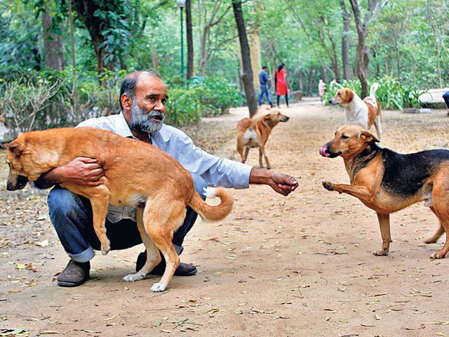When-he-carries-the-food-buckets-to-the-Deer-Park-and-the-lanes-of-the-colony-a-whole-army-of-dogs-come-running-to-his-whistle-Sanchit-Khanna-ht-photo