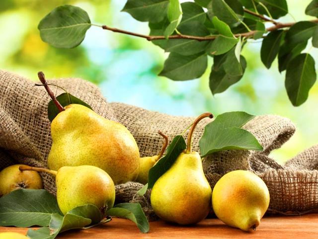 pear enriched diet