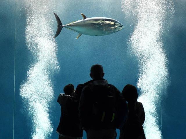 Tokyo aquarium,tuna tank,Tokyo Sea Life Park