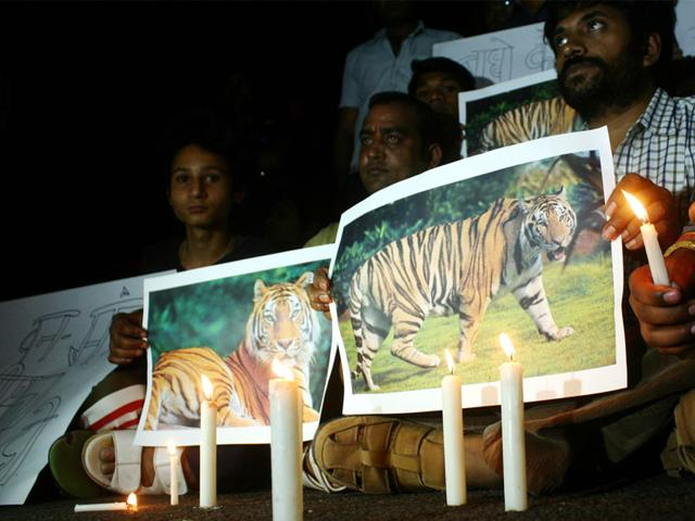 Animal--lovers--take-out--a-candle-light-march--in-Bhopal-to-protest--against-the-killing-of-a-tiger-cub-in-Bandhavgarh-Bidesh-Manna-HT-photo