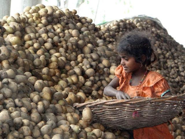 Kapurthala,rain,potato