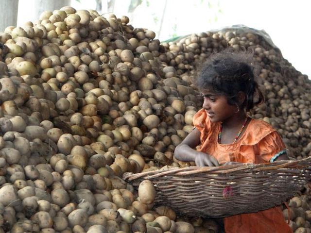 With glut staring, Punjab says 'eat more potatoes'