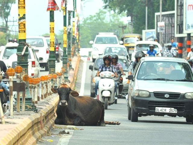 stray animals,menace,streets