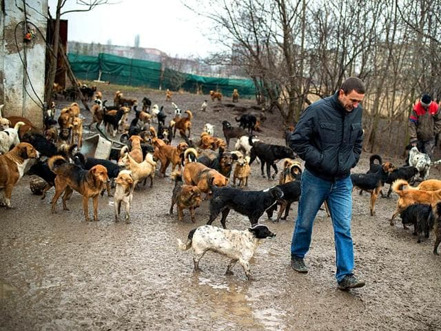 Sasa-Pesic-advocate-for-stray-dogs-walks-through-the-shelter-in-Nis-200-km-south-of-Belgrade-AFP-Photo