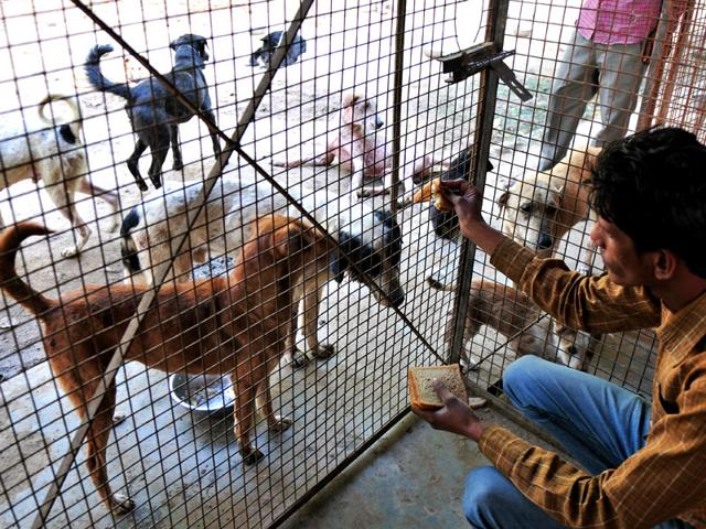 In-absence-of-funding-from-the-UT-administration-the-birds-and-animals-at-the-Society-for-Prevention-of-Cruelty-to-Animals-shelter-in-Sector-38-are-getting-the-basic-minimum-care-Ravi-Kumar-HT-Photo