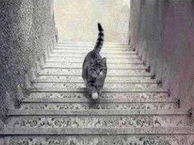 the cat,cat illusion,#schrodingercat