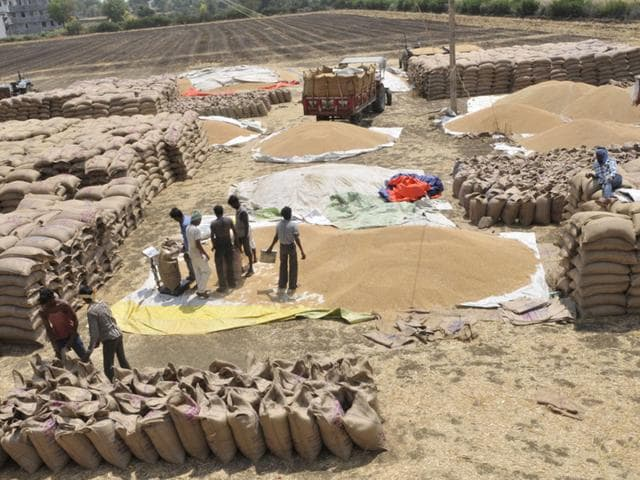 A-view-of-Cheechli-Bairagarh-Mandi-at-Kolar-Road-in-Bhopal-where-wheat-has-been-brought-for-sale-by-farmers-Praveen-Bajpai-HT-photo