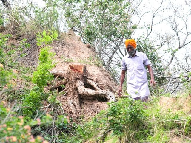 A-man-standing-beside-a-felled-tree-in-the-Shivalik-hills-at-Mirzapur-village-in-SAS-Nagar-district-on-Touesday-Ravi-Kumar-HT-Photo