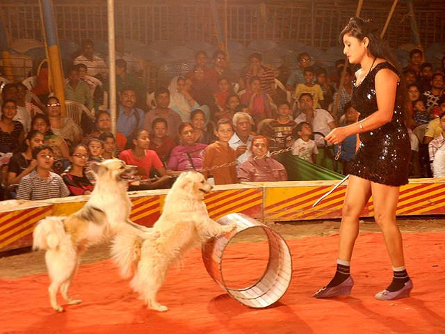 Two dogs performing stunts at the Asiad circus. (HT Photo)