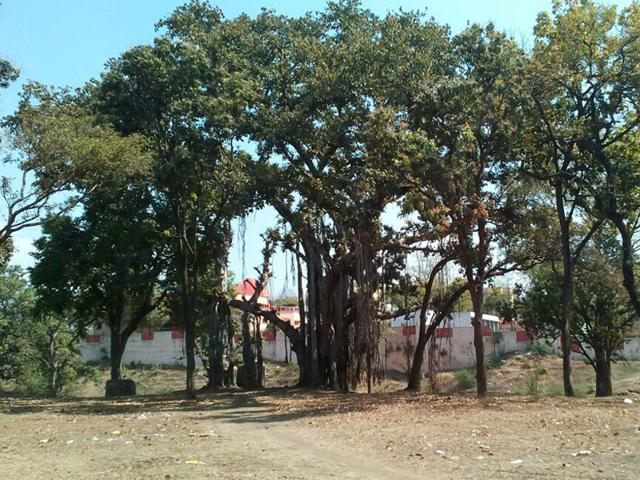 The-historical-banyan-tree-near-jail-campus-in-Jhabua-where-mega-play-would-be-staged-on-April-25