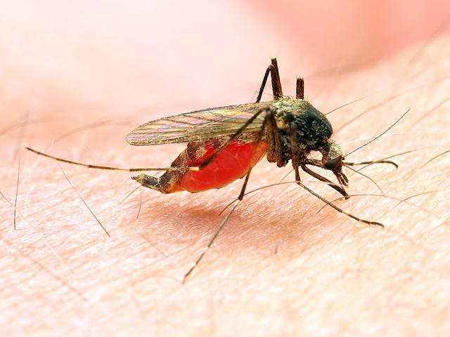 Though-it-is-common-during-the-monsoons-malaria-can-occur-anytime-during-the-year-Photo-Shutterstock