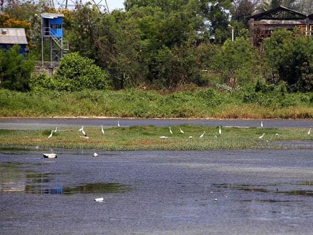 Lokhandwala lake