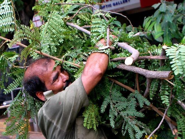 A-dead-tree-was-cut-down-at-Gokhale-Road-in-Dadar-Mumbai-Kalpak-Pathak-HT-photo