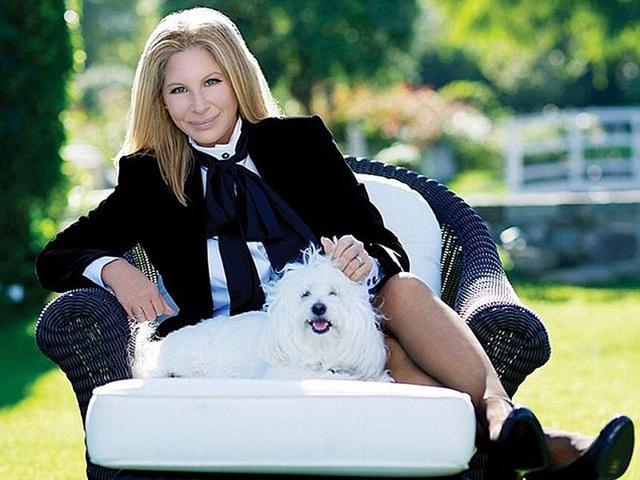 Barbra Streisand,Dog,Coton de Tulear