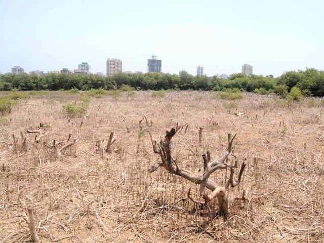 Mangroves,Mangrove trees hacked down,Mangrove destruction