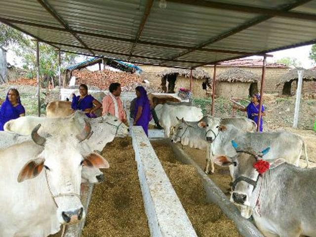 The-project-aims-at-providing-shelter-and-care-to-stray-cows-HT-photo