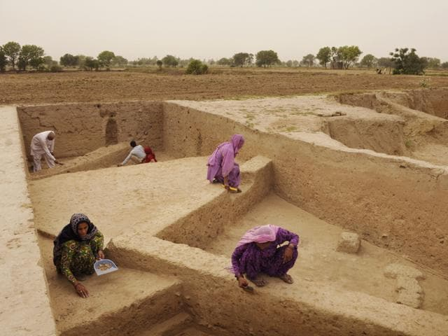 Mound 6 in this village is the site of a complex structure of a Harappan home. (Saumya Khandelwal/ HT Photo)