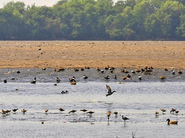 Migratory-birds-leaving-their-homes-at-Okhla-Bird-Sanctuary-in-Noida-as-the-lake-is-drying-during-the-breeding-season-of-the-birds-Sunil-Ghosh-HT-Photo
