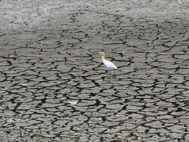 According-to-World-Meteorological-Organisation-2015-could-be-the-warmest-year-on-record-HT-photo