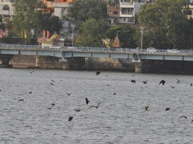 Bats-go-for-belly-dipping-in-Upper-lake-to-cool-their-bodies-and-save-their-lives-in-Bhopal-on-Wednesday-Praveen-Bajpai-HT-photo