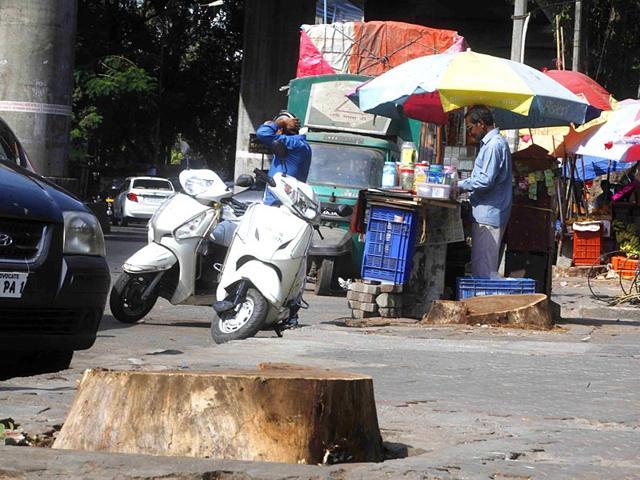 Mumbai: Trees mysteriously drying up at Worli