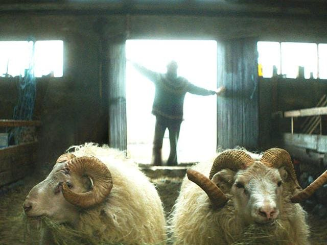 Rams-talks-about-two-brothers-estranged-for-40-years-who-come-together-in-a-remote-Icelandic-valley-when-their-rams-are-in-danger-of-dying-Netopfilms