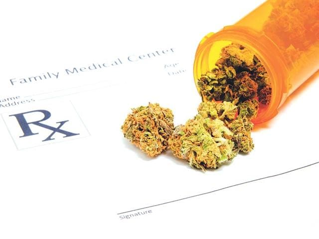 Chemical-compounds-in-cannabis-react-with-cannabinoid-receptors-in-the-brain-which-control-physiological-functions-such-as-appetite-pain-nausea-and-others-Shutterstock