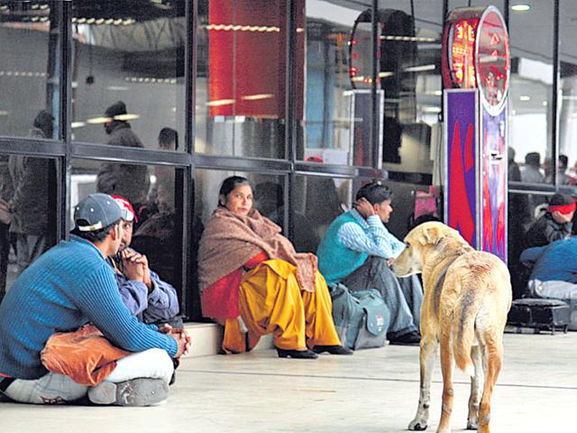 Although-the-south-Delhi-municipal-corporation-sterilises-stray-dogs-around-the-airport-it-provides-little-respite-to-passengers-HT-file-photo