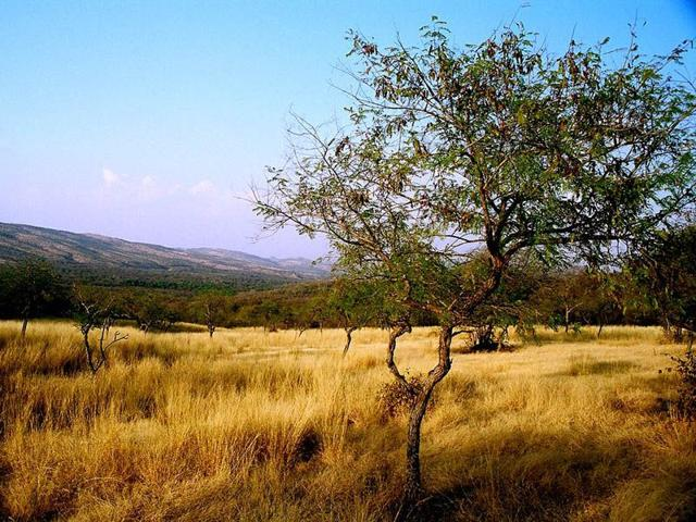 Haryana starts GIS monitoring of Aravalli forests
