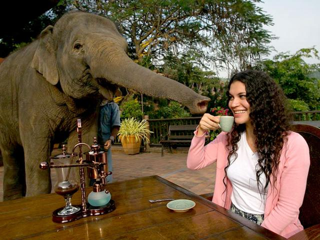 Elephant Dung Coffee,Black Ivory Coffee,Weird Coffees