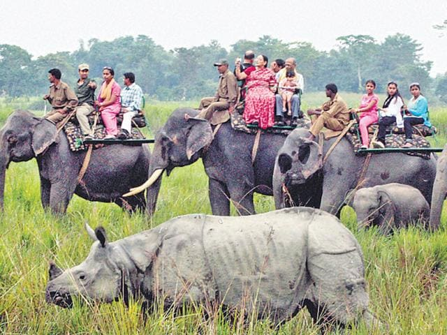 Most-of-the-poachers-were-gunned-down-at-Assam-s-Kaziranga-National-Park-where-rhinos-are-killed-for-horns-which-are-then-smuggled-out-of-the-country-PTI-file