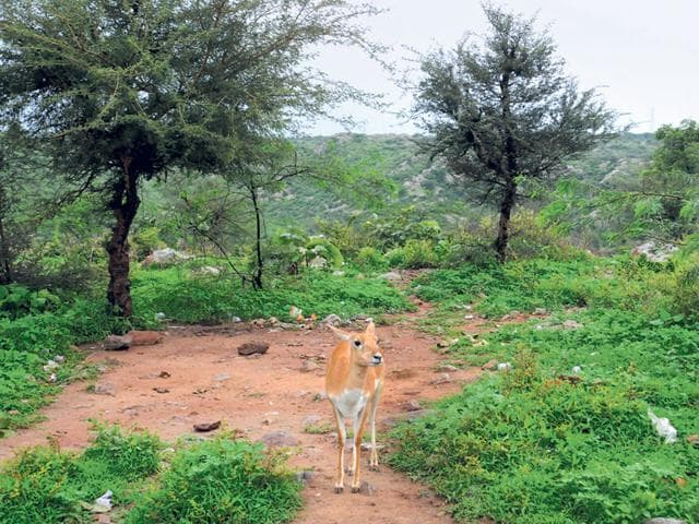 Forest guard shortage makes it hard to check poaching