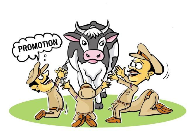 cows,stray cows,rehabilitation