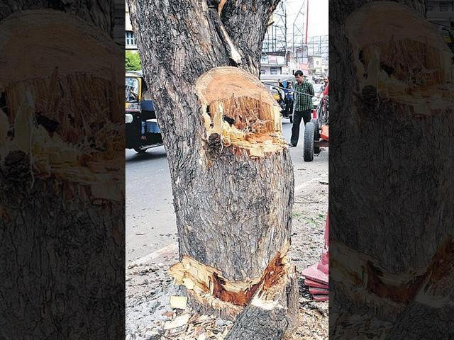 A-large-number-of-trees-have-been-chopped-for-road-widening-in-Ranchi-HT-Photo