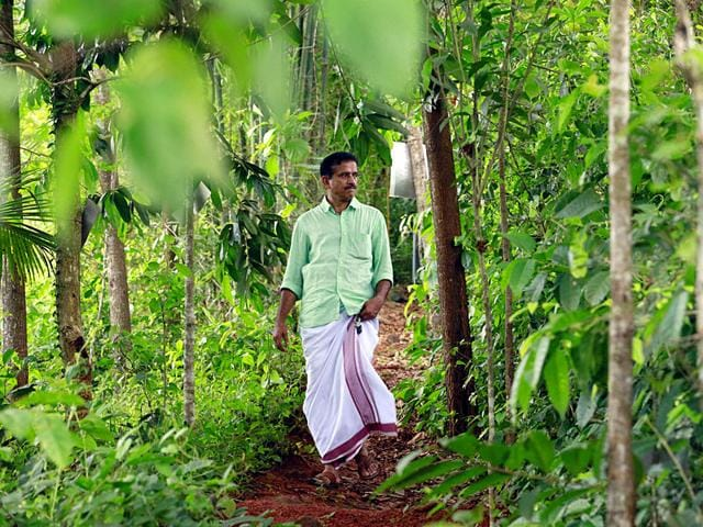 Kerala-businessman-V-Mohammed-Koya-has-created-a-slice-of-Western-Ghats-in-an-urban-cluster-with-a-thick-1-000-odd-medicinal-plants-in-Arambara-about-22-km-from-Kozhikode-HT-Photo-K-Sasi