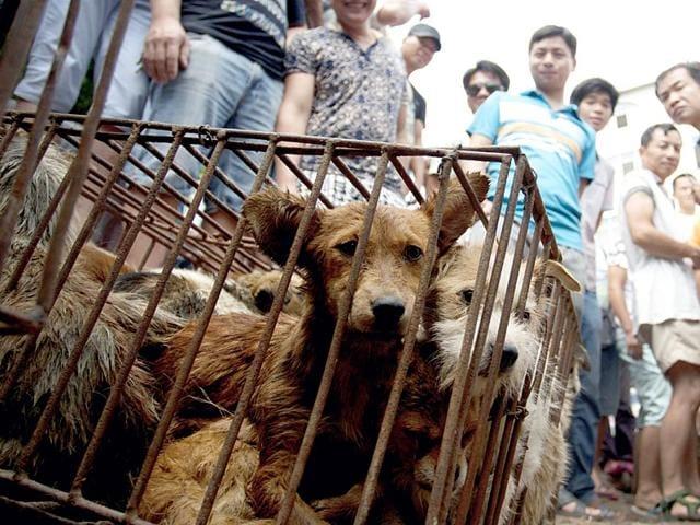 Yulin festival,dog eating,dogs