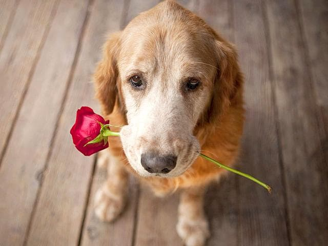 If-you-re-looking-for-love-or-want-to-make-new-friends-Get-a-dog-A-canine-companion-may-dramatically-help-you-expand-your-social-network-suggests-a-study-Shutterstock