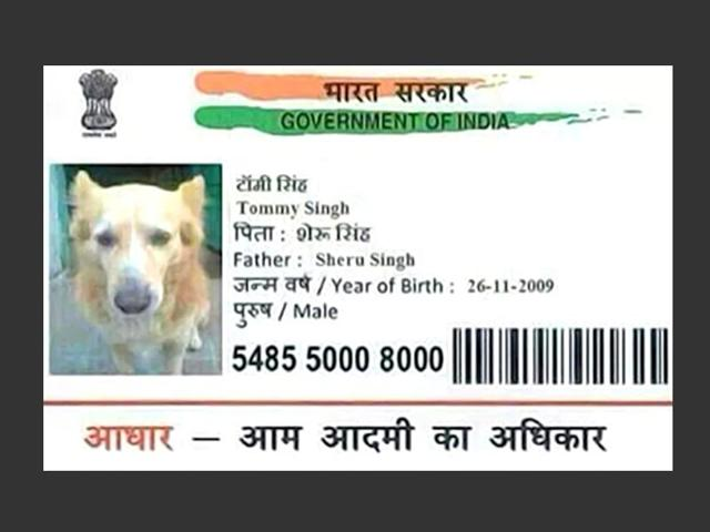 Man arrested for getting Aadhaar card for dog