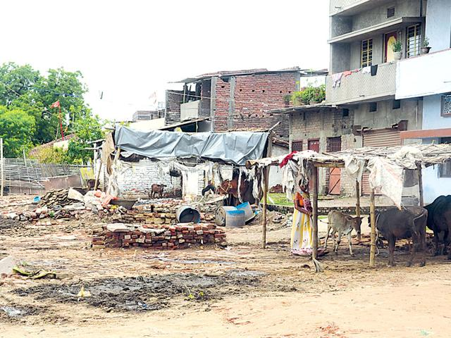 A-cowshed-constructed-on-army-land-at-Anand-Bazar-in-Danapur-Cantonment-area-Santosh-Kumar-HT-file-photo