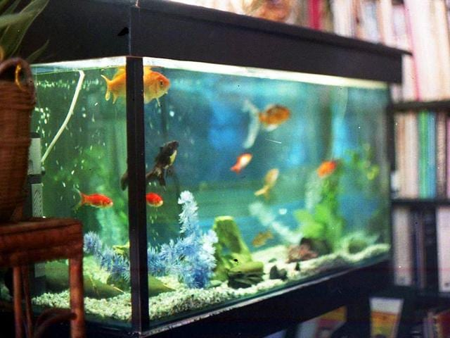 Fish Tank,Aquarium,Blood Pressure