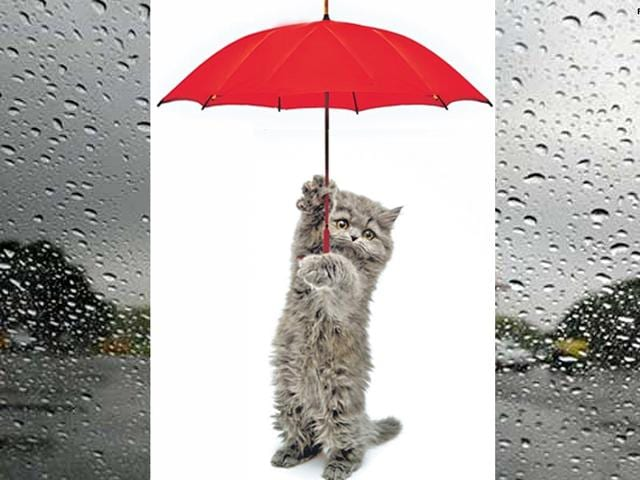 Your-four-legged-freinds-also-need-special-care-during-the-rainy-season-Monsoon-can-be-tough-on-them-and-here-s-how-you-can-protect-them