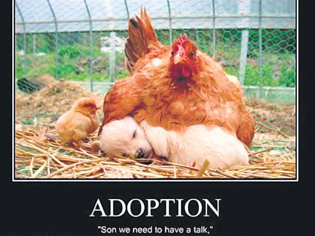 Do-you-want-to-adopt-a-child